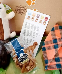 Sammy Squirrel Gift Box